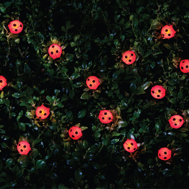 20 Ladybird/Bee Solar String Lights