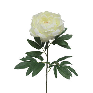 Peony Single Stem Cream Flower 74cm