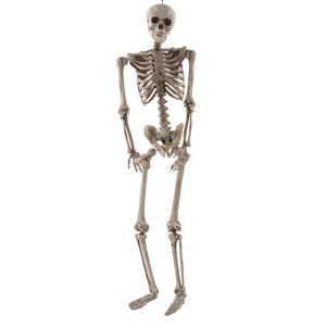 1.5M Hanging Skeleton