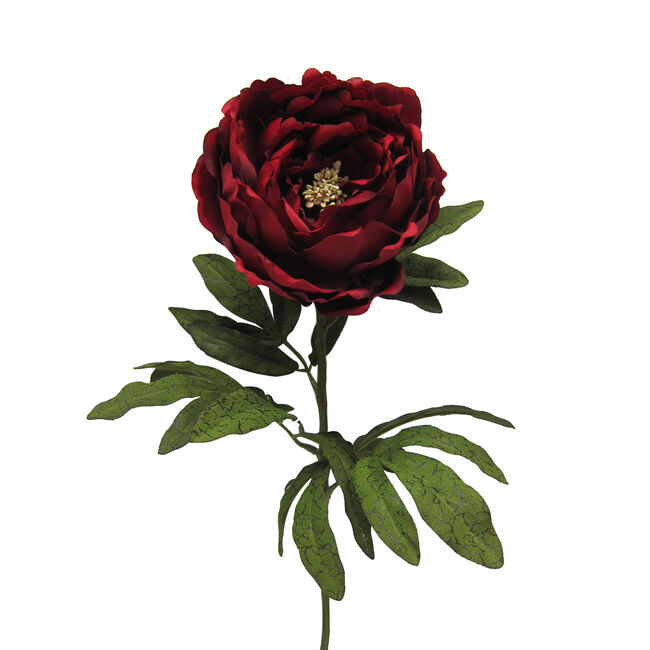 Peony Single Stem Red Flower 74cm