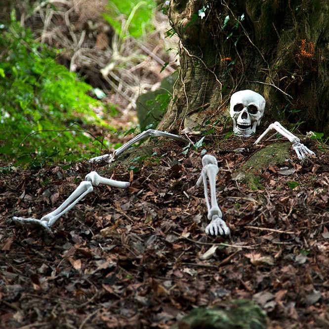 groundbreaking skeleton